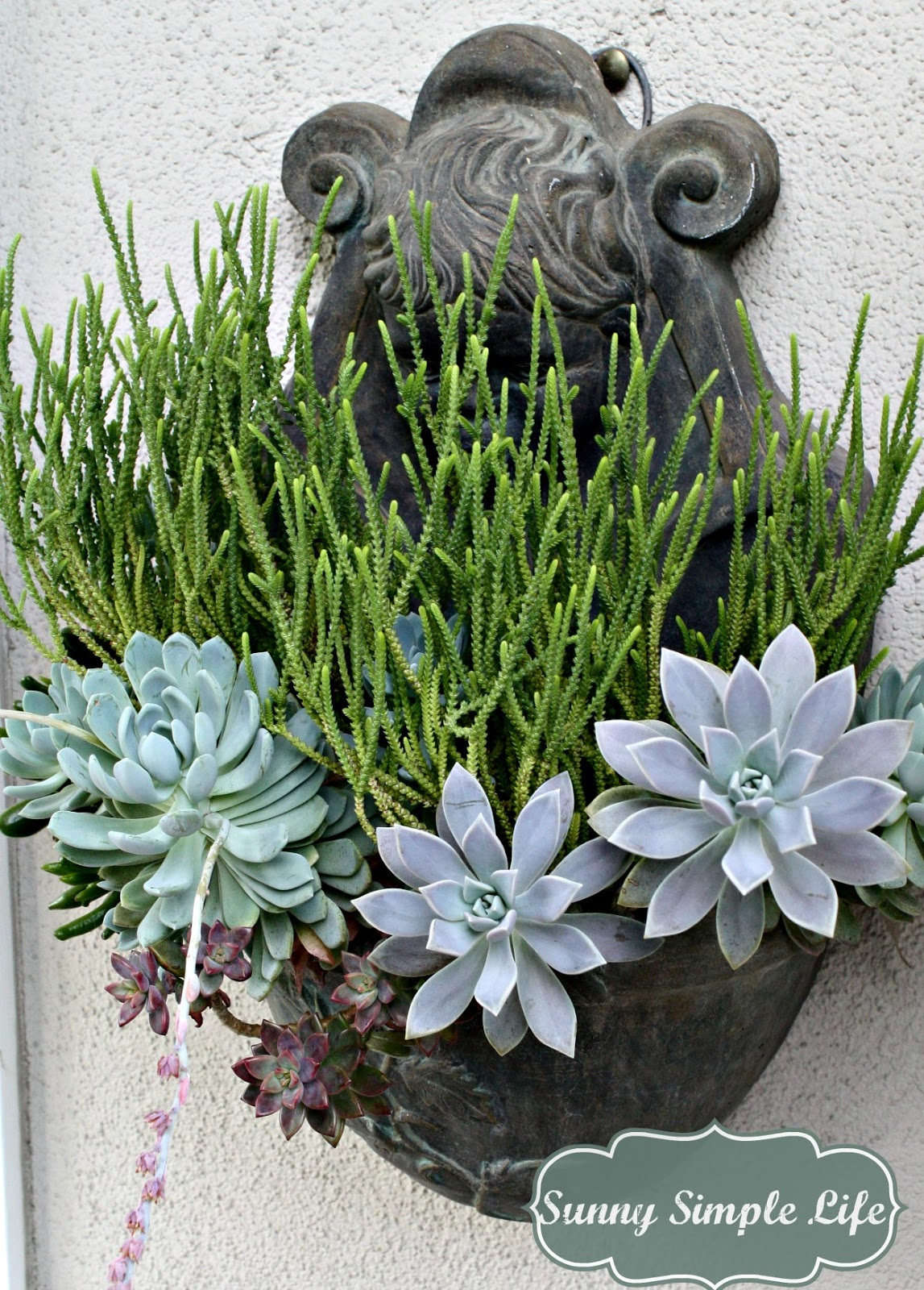 Sunny Simple Life: How to Grow Succulents